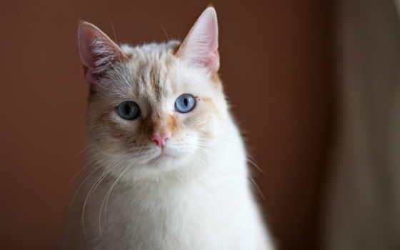 кошки, взгляд, грустный, кот, kedi, кого, стерилизация, göz, zhivotnye, способности,