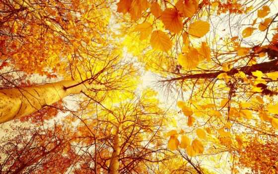 лес, yellow, листва, trees, осень, sun