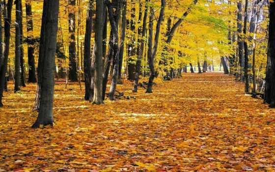 природа, осень, листва