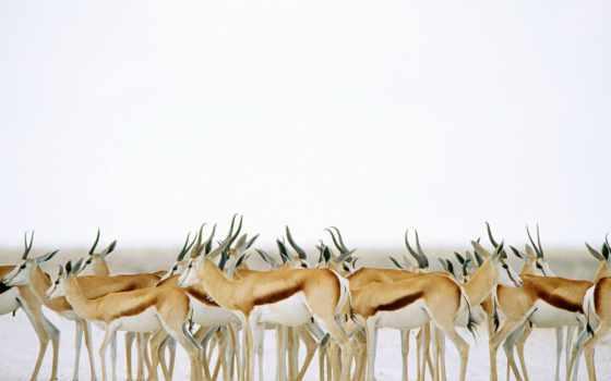 коллекция, дикой, природы, потрясающая, фотографий,