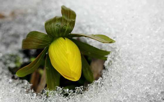 снег, цветы, снегоступы