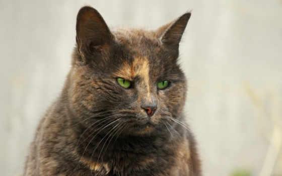 кот, angry, funny