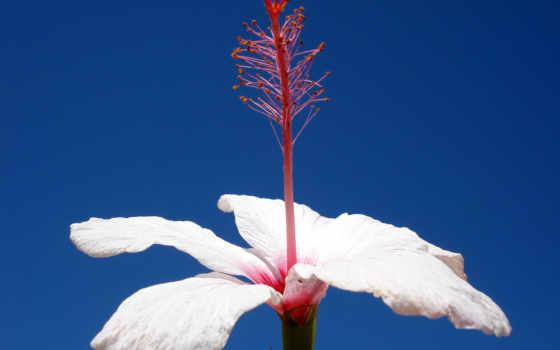 цветы, single, white