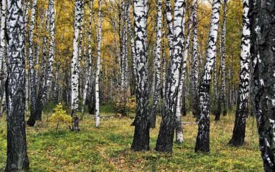 пейзажи -, природы, лесные, красивые, украшения, новой, коллекции,