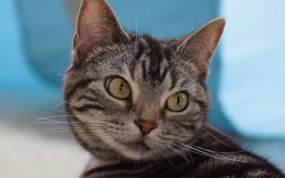 кот, кошки, mix, усы, red,