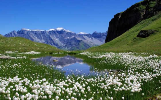 alpin, tundra, çayırlar, википедия, ağaç, пояса, belt,