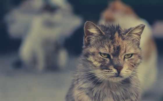 photos, flickr, кот, world, мар, часть, cats, коллекция, pozhydaev, animals,
