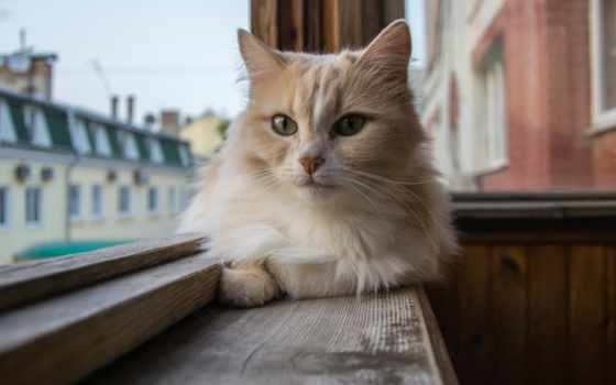 кот, кошки, подоконнике, дома, окно, балкона, сидит,