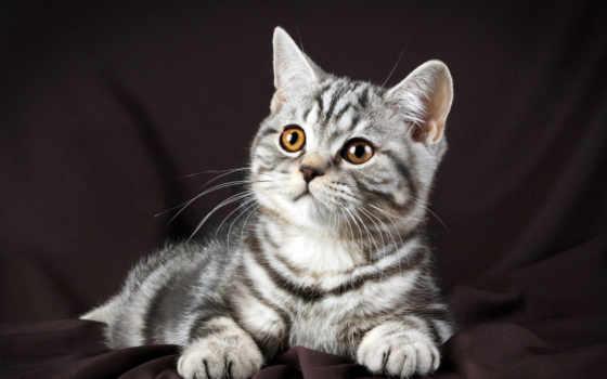 кошки, котят, киски, котята, кошек, красивые, кот, пушистые, фотографий, котов,