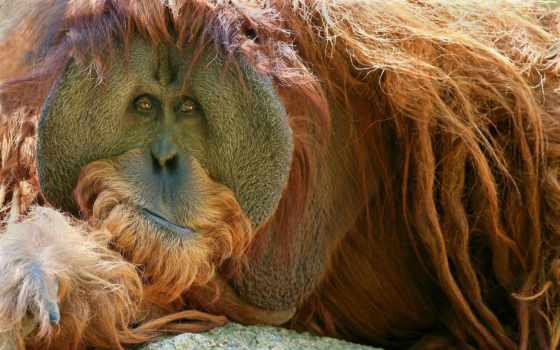 lemur, monos, дону, животных, zoo, simios, самых, ростова,