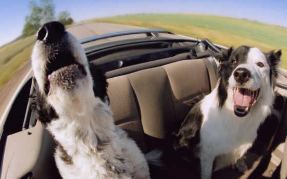 машине, собаки, собак, собака, traffic, собаку, сам, когда, очень, автомобиле,