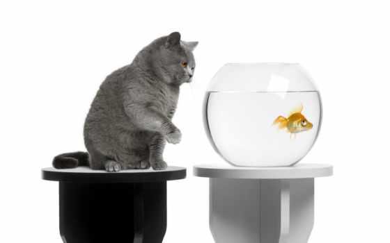 fish, аквариум, корабль, который, home