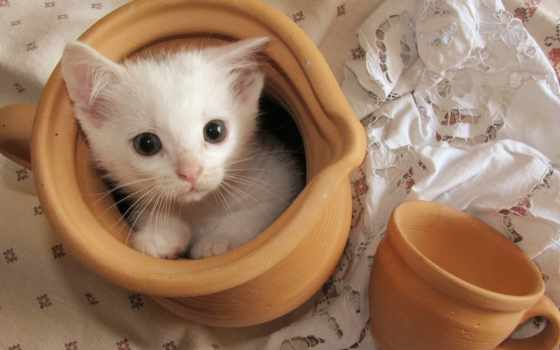 котята, кот, войдите