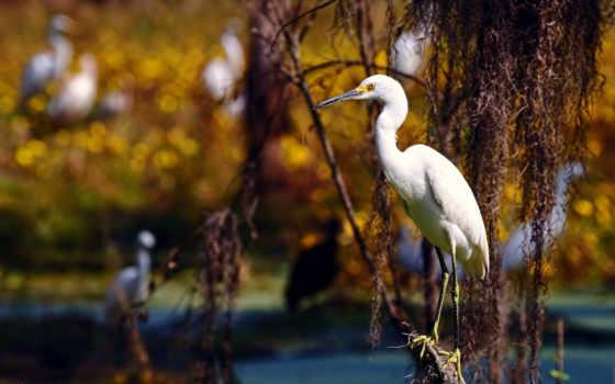 птица, природа, птицы