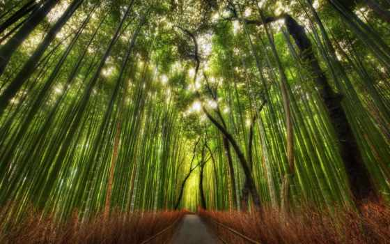 grove, березовая, бамбуковая, бамбуковой, дорога, роще, коллекция, абстракция,