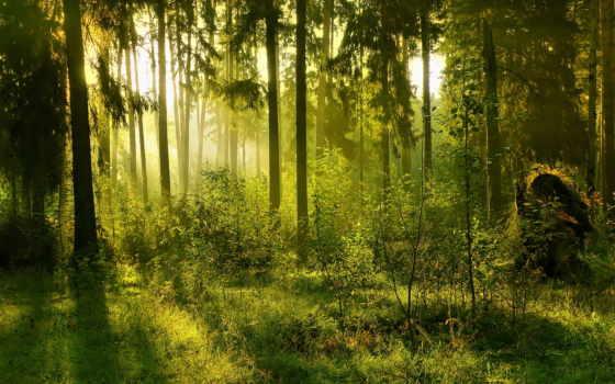 гуркин, презентация, дек, лес, katrin, answers, свой,