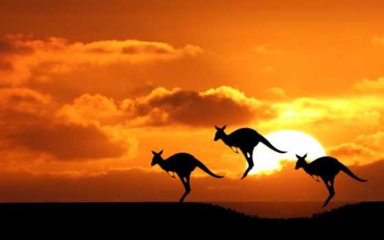 австралия, ди, продолжительность, youtube, reply, you, квокка,