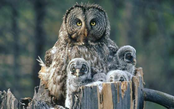 птиц, птицы, потомстве, забота, совы, world, amazing, жизни, сов,