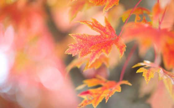 листья, osen, осенние