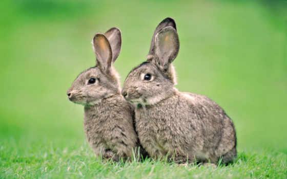 кролики, кроликов, комбикорм