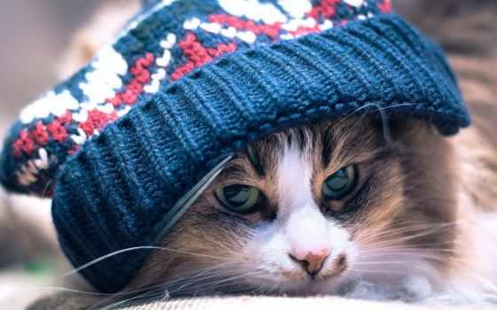 похолодание, погода, ukraine, ожидается, снег, forecast, украину, будет, погоды, ближайшие, сегодня,