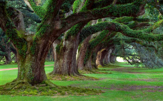trees, старые, природа, зелёный, трава,