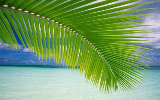 sounds, природа, cfont, pro, sienna, toyota, индонезийский, туры, waters, продолжительность, спать,