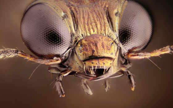 насекомое, high, resolution, widescreen, flickr, pictures, microsculpture, фея,