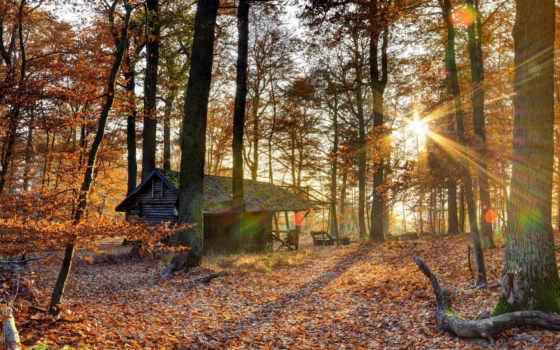осень, природа, лес, house