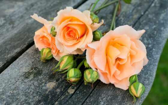 розами, cvety, anyprint