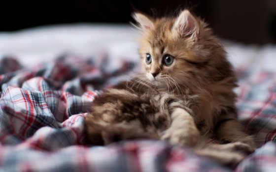 котенок, кот, смотреть Фон № 113716 разрешение 1680x1050