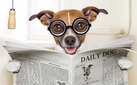 бультерьер, рассел, jack, юмор, унитаз, очки, dogs, desktop, изображение, газета,