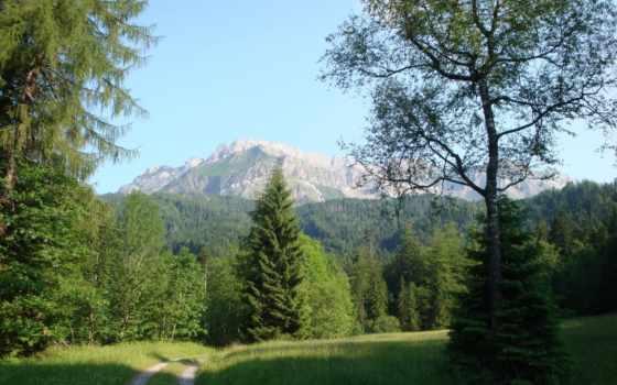 landscape, trees, горы, природа, summer, дороги, swiss, ёль, lucerne, трава, kriens,