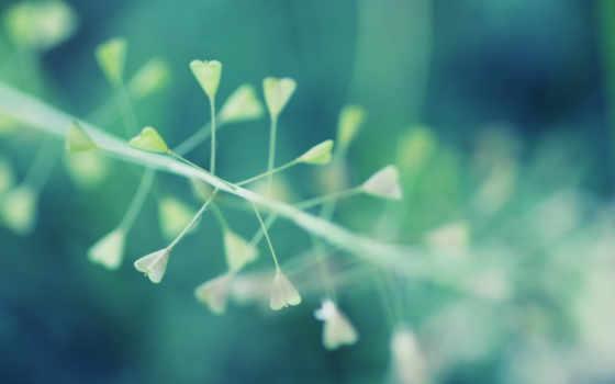 природа, minimalist, images, макро, pro,