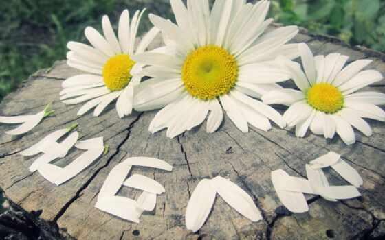love, семья, день, loyalty, dnee, postcard, мужчина, you, give