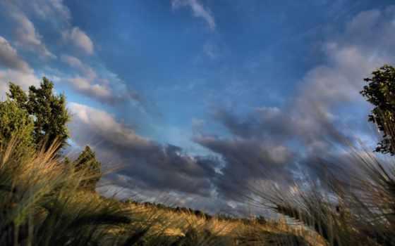 поле, небо, ночь