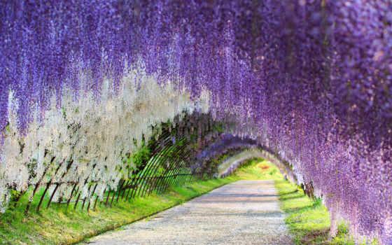 kawachi, фудзи, gardens