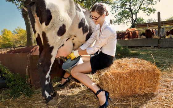 молоко, корова, seno, devushka, ведро, деревя, leto,