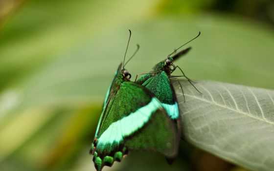 макро, рисунки, butterflies