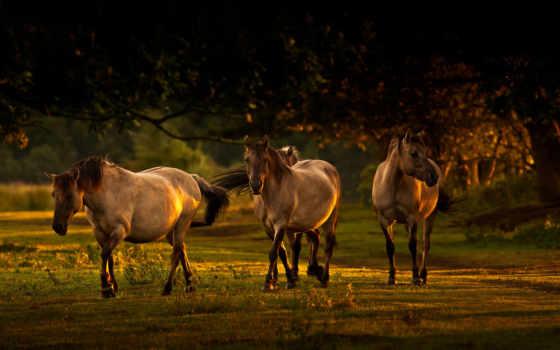 лошади, лошадь, кони