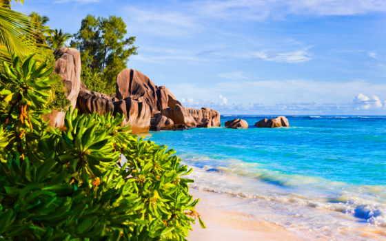 море, пляж, песок, пальмы, sun, широкоформатные,
