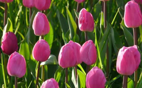 guten, morgen, freitag, epix, bilder, бер, tulpen, inpalma, smartphone, een, op,