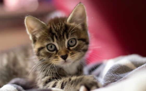 Пушистый котенок в корзинке