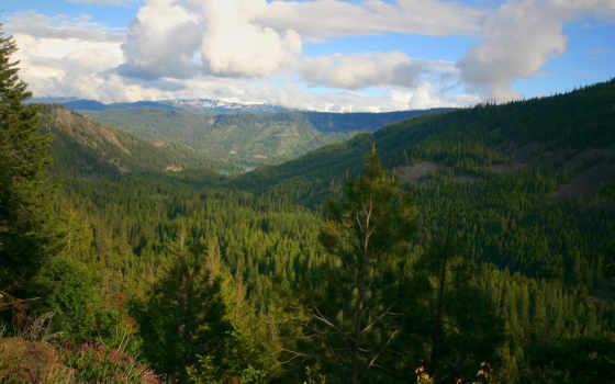 деревья, горы