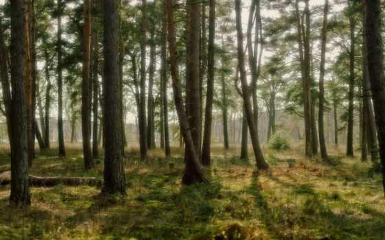 лес, природа Фон № 32251 разрешение 1920x1080