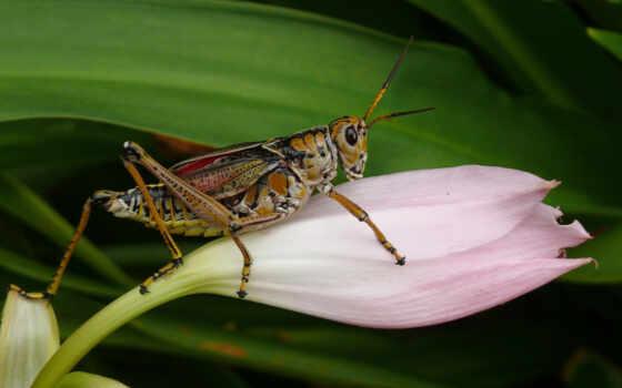 изображение, full, locust