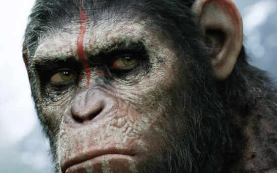 обезьян, planet, revolution, сниматься, смотреть, online,