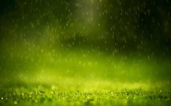 дождь, зелёный, природа
