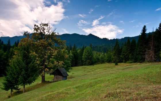 поле, lodge, лес