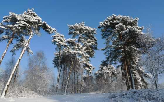 winter, trees, листва, красивые, дек, кроны,